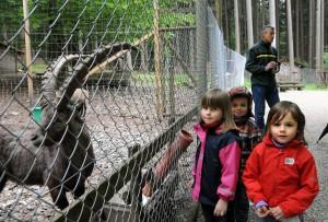 Kinder beobachten Steinbock im Wildgehege